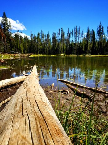 Water Tree Wood - Material Lake Sky Tranquil Scene Blue Tranquility Growth Nature Scenics Beauty In Nature Day Outdoors Green Color Cloud - Sky No People Green Non-urban Scene