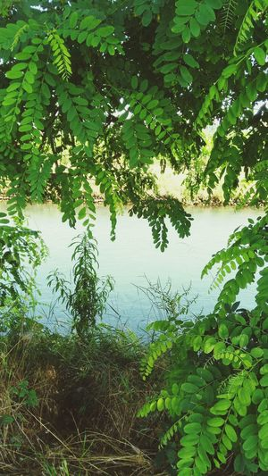 Grass Water River Riverside River View Riverwalk By The River Riverscape Green Leaves Landscape