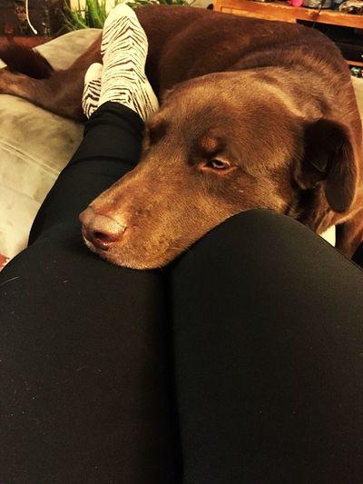 Always Be Cozy Puppy Love ❤ Snuggles Cuddlebuddy