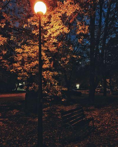 Street light in park at night