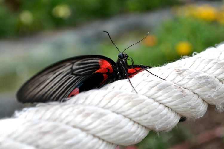 Close-up of butterfly on rope
