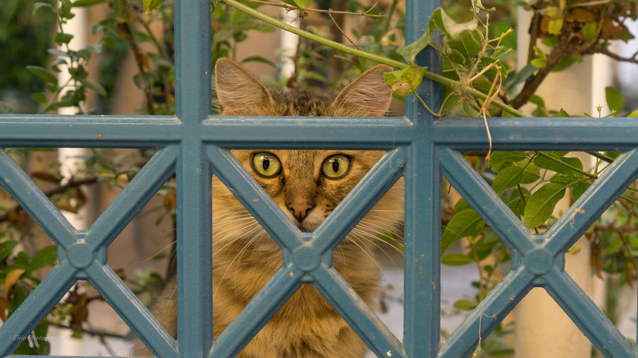 One of my best shots I believe. Pet Pet Photography  Cat Greece Greece Islands Aegina Village Life Taking Photos My Point Of View 35mm 1.8 Portrait Sony A6000 Enjoying Life Travel Destinations Green Eyes. Geometric Art Geometria