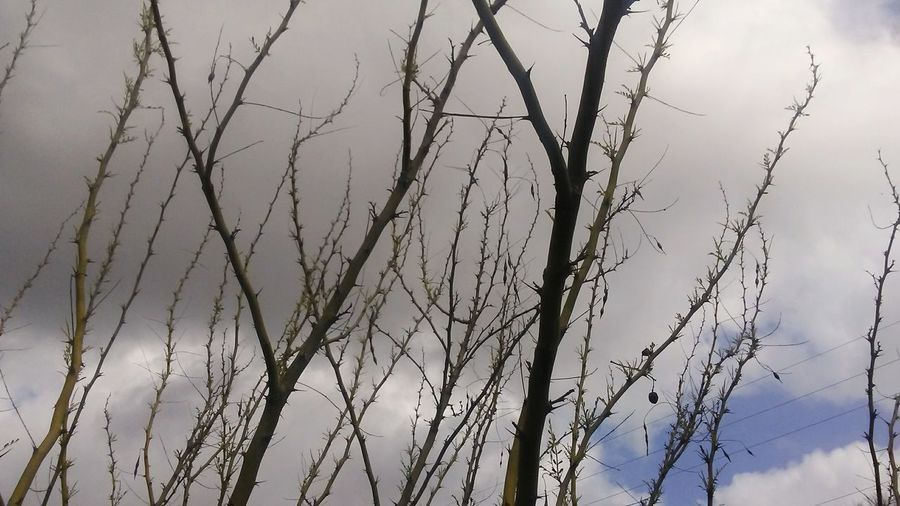 Sky Nature No People Day Outdoors Plant Growth Tree Branch Beauty In Nature Close-up Simplicity Basıc Desert Palo Verde Texas