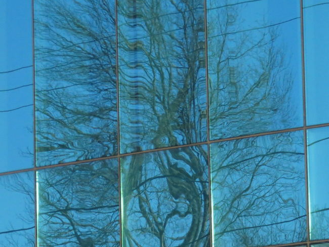 Swirly tree reflection! Architecture Bare Tree Blue Branch Day Glass - Material Glass Windows Glass Windows With Reflections Low Angle View Nature No People Office Building Glass Office Buildings Outdoors Portsmouth Photography Portsmouth, NH Reflection In The Glass  Sky Swirly Swirly Tree Tree EyeEmNewHere Tree Reflections EyeEm Ready   The Graphic City