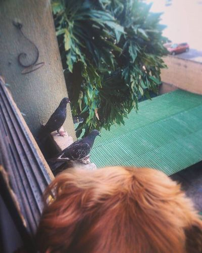 My Dog Connei viendo las aves House Piso5 Esperoquenosalte Animals