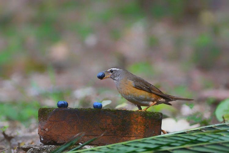 Close-up of bird perching on rusty metal