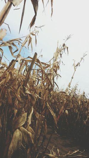 Fall.??