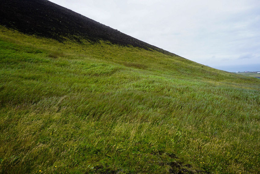 Vestmannaeyjar Heimaey Windy Agriculture Nature Long Grass Fresh Freshness Plants Rural Scene Agriculture Field Sky Grass Landscape Green Color Cloud - Sky