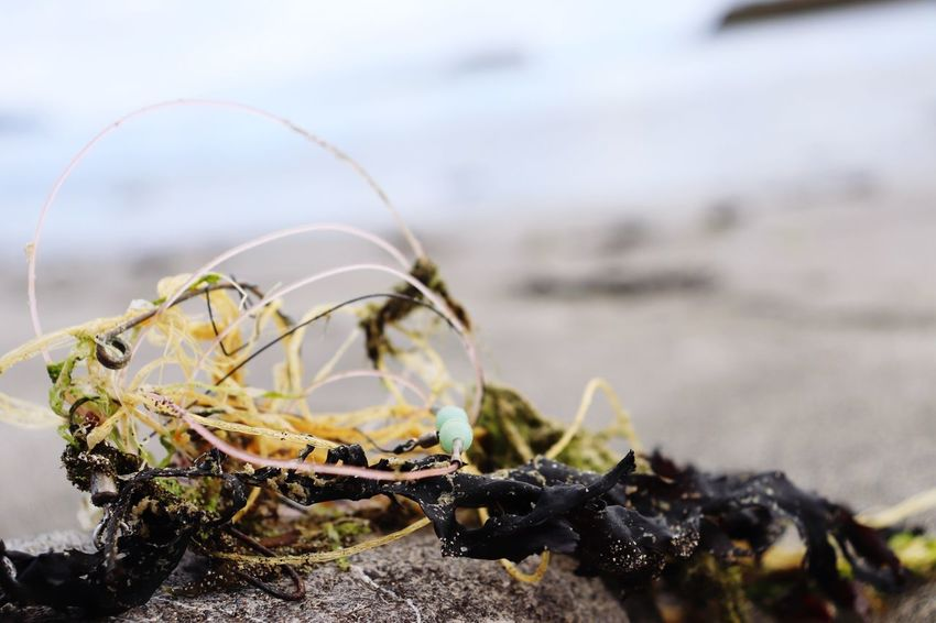 EyeEm Selects Close-up Nature Day No People Focus On Foreground Beach Animal Themes Water Selective Focus Sea Outdoors Sand