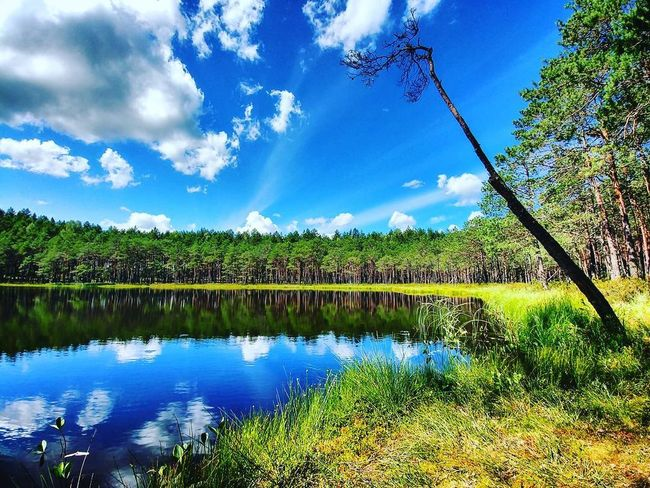 Lake Reflection Cloud - Sky Water Nature Tree Landscape Travel Scenics Beauty In Nature Deadtree Lithuania Lithuania Nature Aukštaitija Relaxing Summer
