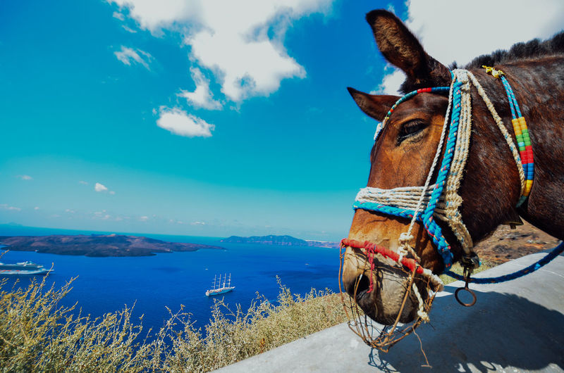 Close-Up Of Donkey By Sea Against Blue Sky