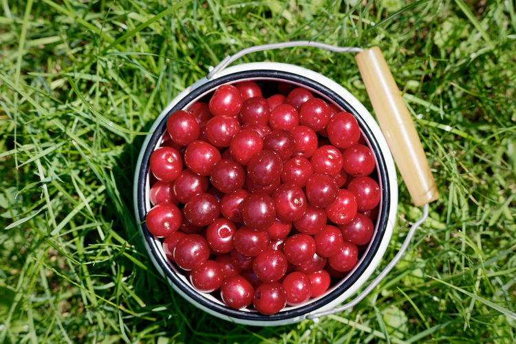 High angle view of raspberries in bowl on grass