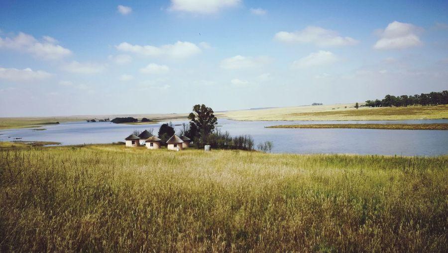 Water Rural Scene Lake Sky Grass Landscape Marsh Shore Wetland Swamp Flock Of Sheep Water Plant