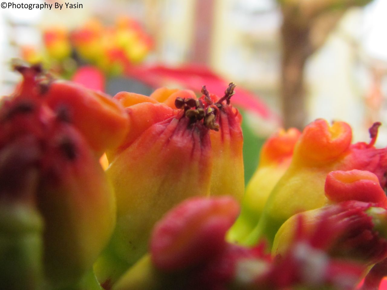 flower, petal, nature, fragility, flower head, freshness, close-up, selective focus, beauty in nature, growth, no people, plant, red, outdoors, day, blooming