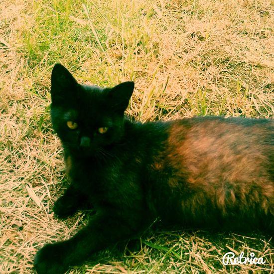 Ricky❤ Little BIG Cat