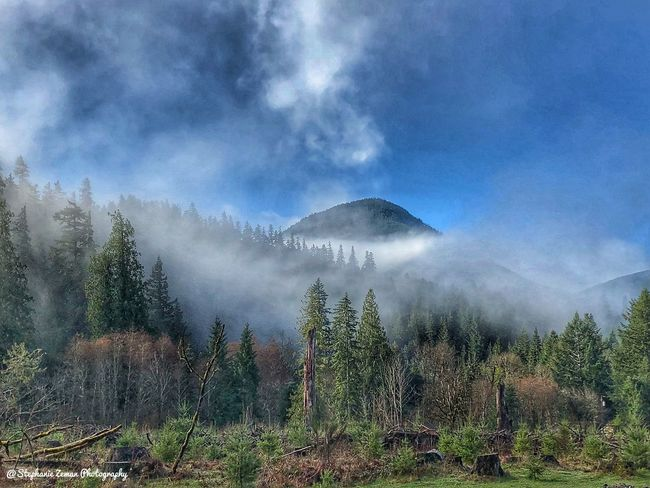 Morning Mountain Fog Mountain Beauty In Nature Plant Tree Cloud - Sky Sky Scenics - Nature Mountain Nature Environment Fog Land Non-urban Scene Landscape Outdoors Day Idyllic Tranquility Tranquil Scene