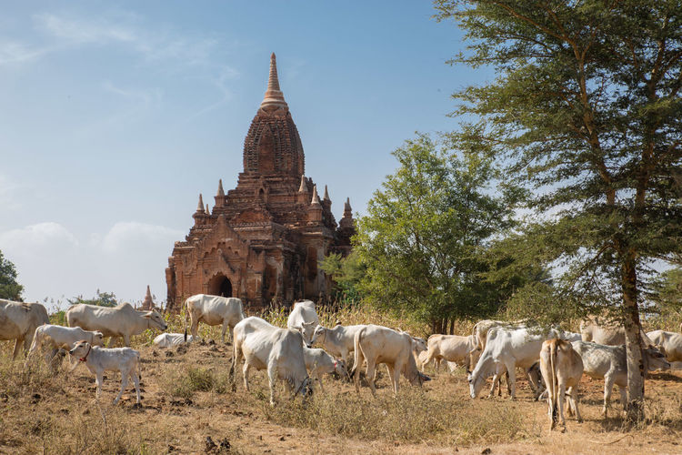 Horses in a temple