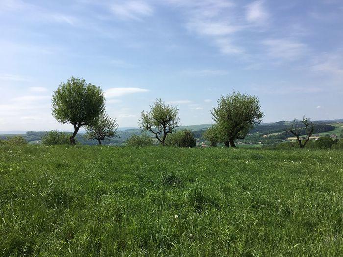 Plant Sky Grass