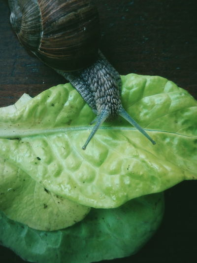 Close-up Nature Animals In The Wild Animal Themes EyeEm Best Shots Beauty In Nature No People VSCO EyeEm Best Edits Macro Macro Photography Snail