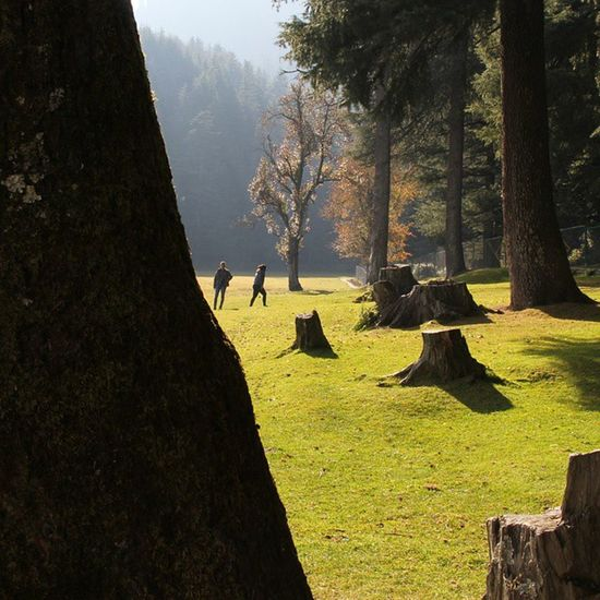 Dream Instapic Khajjiar Travel woodstravelasiaindiatraveler_india_soi