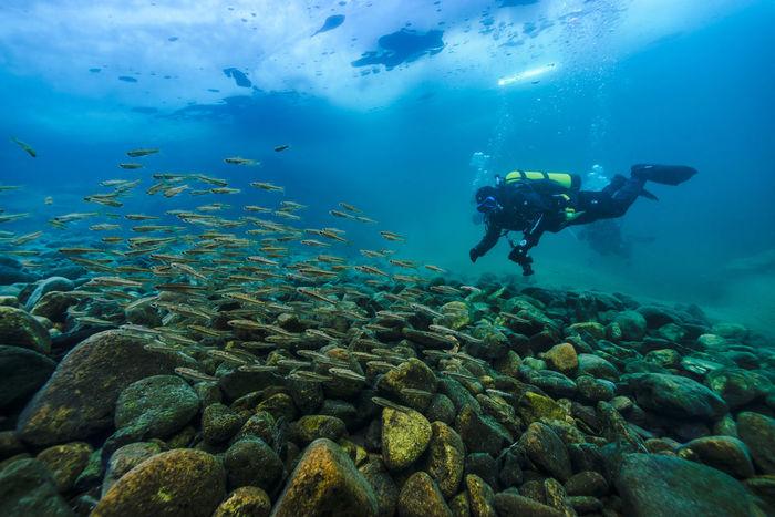 winter underwater Aquarium Beauty In Nature Blue Cloud - Sky Day Nature Outdoors Rock - Object School Of Fish Sea Life Sky Swimming UnderSea Underwater Water