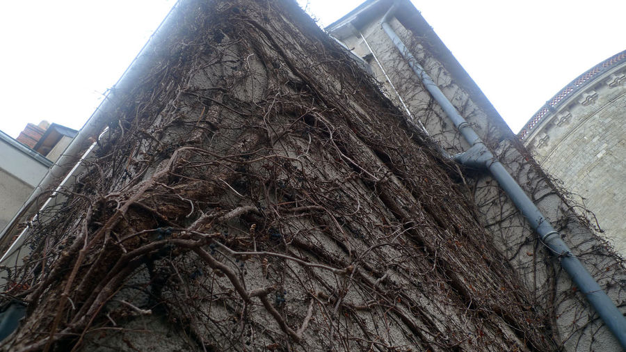 tree wall Low