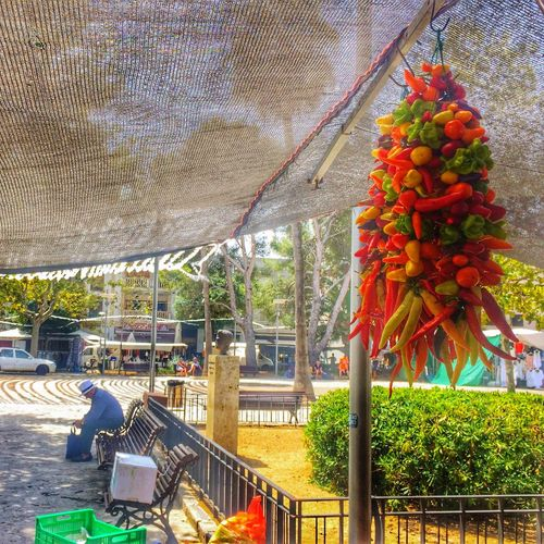 Chillis Port De Pollenca Chilli Pepper Mercado Plaza Square Man On Bench Market Chilling Chillis Tree Architecture Built Structure Day Hanging Building Exterior Outdoors