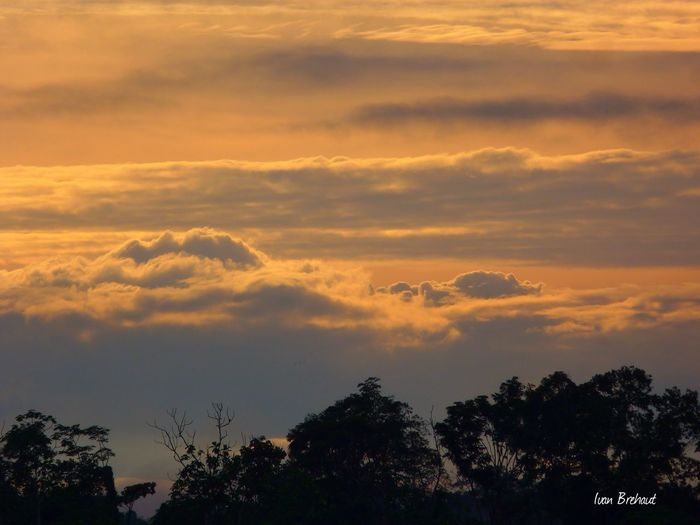 Amanecer en Atalaya, Ucayali, Perú Tree Sunset Scenics Tranquil Scene Tranquility Beauty In Nature Silhouette Cloud - Sky Idyllic Majestic Nature Cloud Sky Cloudscape Atmosphere Growth Dramatic Sky Treetop Atmospheric Mood Sun