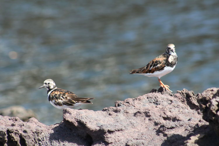Birds perching on rocks