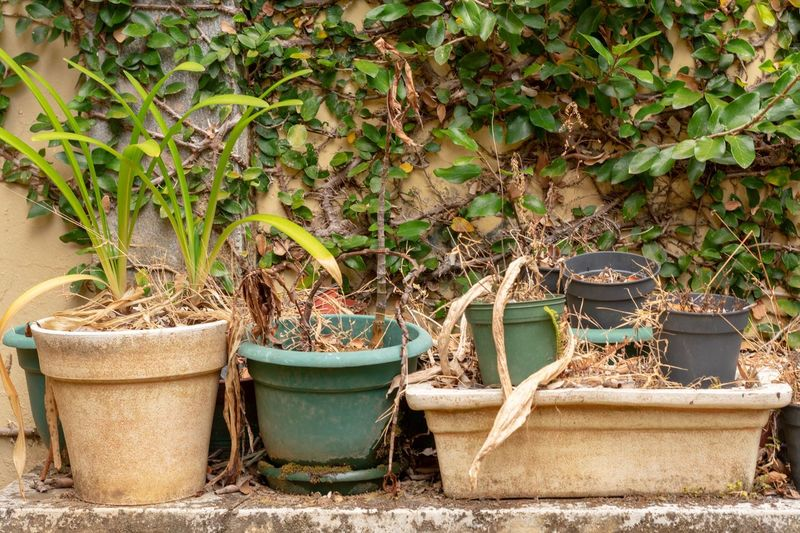 Potted plants in old yard