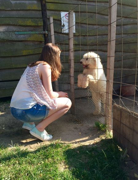 Dog Puppy Girl Girl With Puppy Relaxation Outdoors Day Sitting Lovely Cute Cute Pets Hungarian Komondor