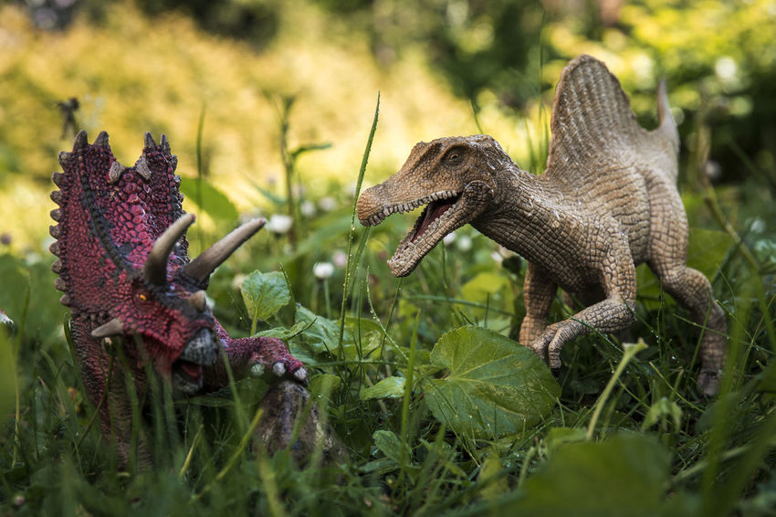 Schleich Dinosaurs Dinosaurs Schleich Schleich Tiere Animal Themes Animal Wildlife Animals In The Wild Close-up Day Jungle Nature No People One Animal Outdoors Reptile