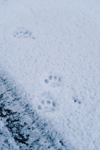 Paw prints in