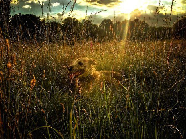 Soaking Up The Sun Enjoying The Sun I Love My Dog Lurcher Sighthound LEO... The One Eyed Lurcher... Bushy Park United Kingdom Taking Photos