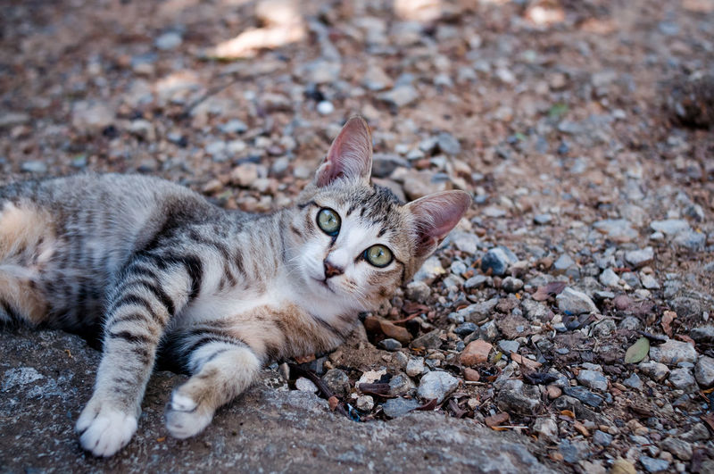 Portrait of a cat lying on ground