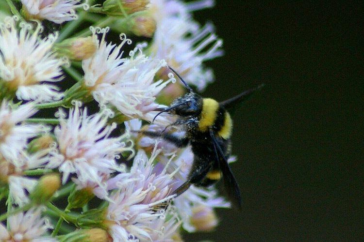 """""""On the Honey"""" Macroclique Macro Photography Streamzoofamily Macro Nature"""