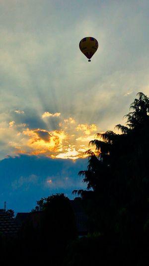 Heißluftballon Sky Cloud - Sky Tree Silhouette Sunset Plant Nature