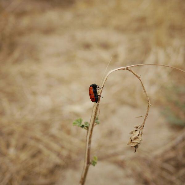 Bug Lumix Portugal Close-up Nofilter Climbing Climb Up!