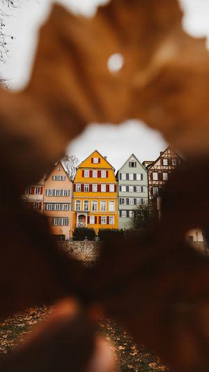 Buildings seen through autumn leaf
