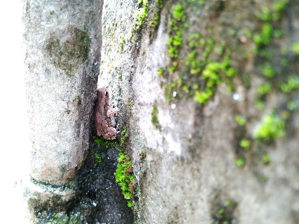 Frog Hidding From  BIG Giant Creatures Like Us 😀😀😀😀me Water Side Little Things Turns Attracting Day Human Body Part Close-up Textured  Tree Outdoors One Person