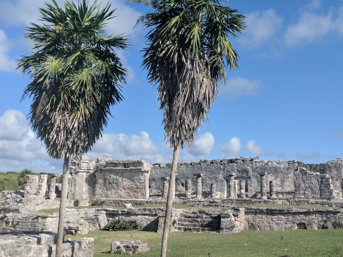 Palm Trees At Old Ruins Against Blue Sky