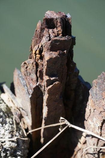 Close-up of damaged wood against rock