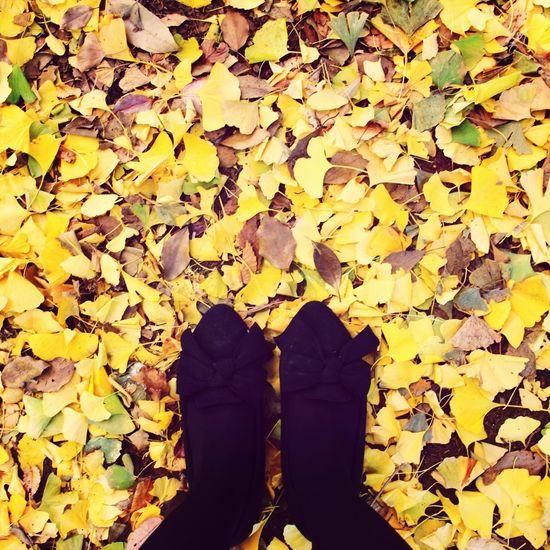 紅葉 銀杏の絨毯 Autumn Me