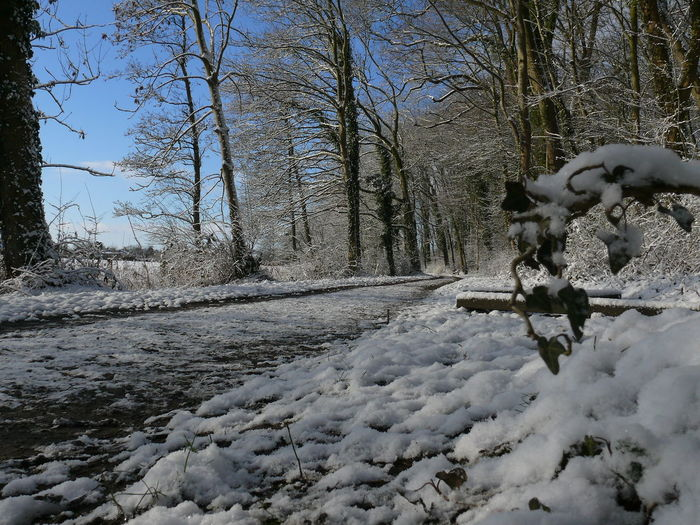 Wilhelmshaven Going For A Walk Panasonic Lumix Stadtpark Hometown Germany Nature Beautiful Nature Wood Park Winter Tree Snow Cold Noedit Nofilter