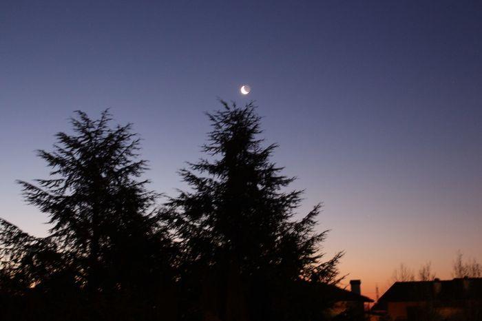 05/02/2016 Luna calante all'alba Luna Moon Alba Sunrise Moonrise LaMiaLuna LunaDiGi Pini Cielo Sky Trees Trees And Sky
