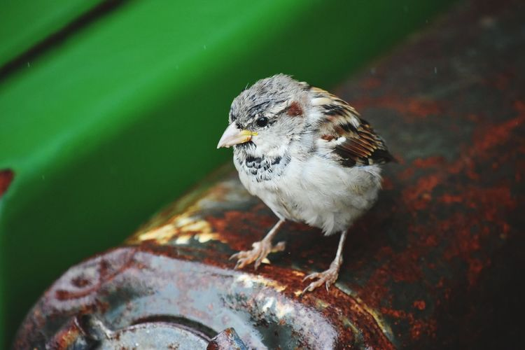 High angle view of bird perching on metal
