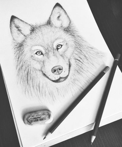 A Wolf. Drawing Wolf Art Drawing ByMe Photography Animal Portrait