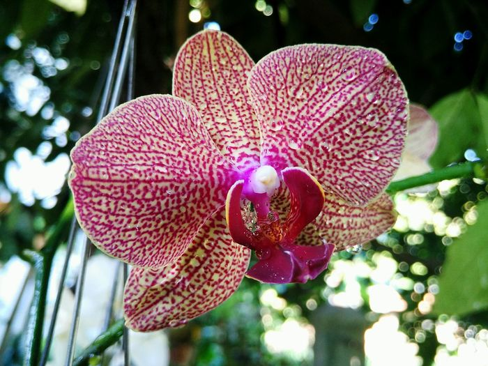- orchid - 🌸