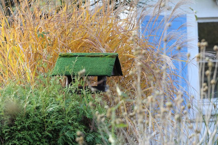 Vogelhäuser Green Color Day Grass Outdoors No People Built Structure Growth Plant Architecture Nature Building Exterior Beauty In Nature Herbst17 🦋 Autumn 2017 Beauty In Nature Nature Postcode Postcards