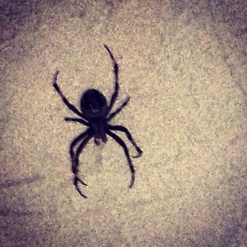 Spider On The Road
